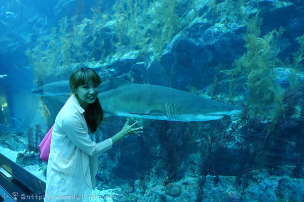 杜拜+義大利。夢想之旅 Day6-3 杜拜【世界最大水族館&水底動物園(Dubai Aquarium & Underwater Zoo)】就在Dubai mall裡面!