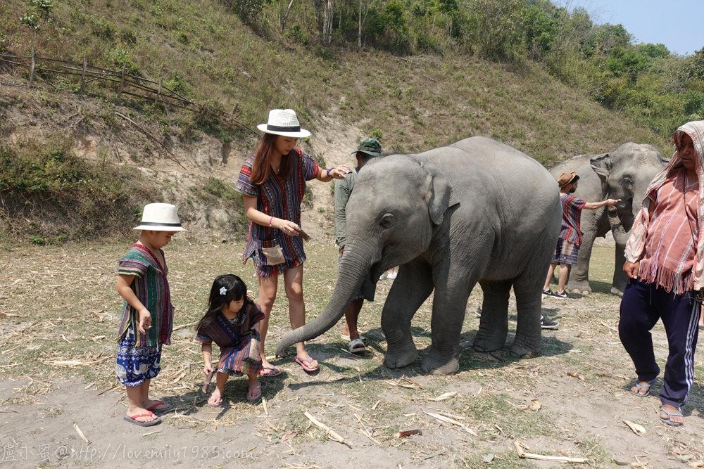 【泰國。清邁】超親近動物的親子遊/自由行,激推哪~太多人敲碗,先來個行程總覽,內有住宿/行程連結&費用