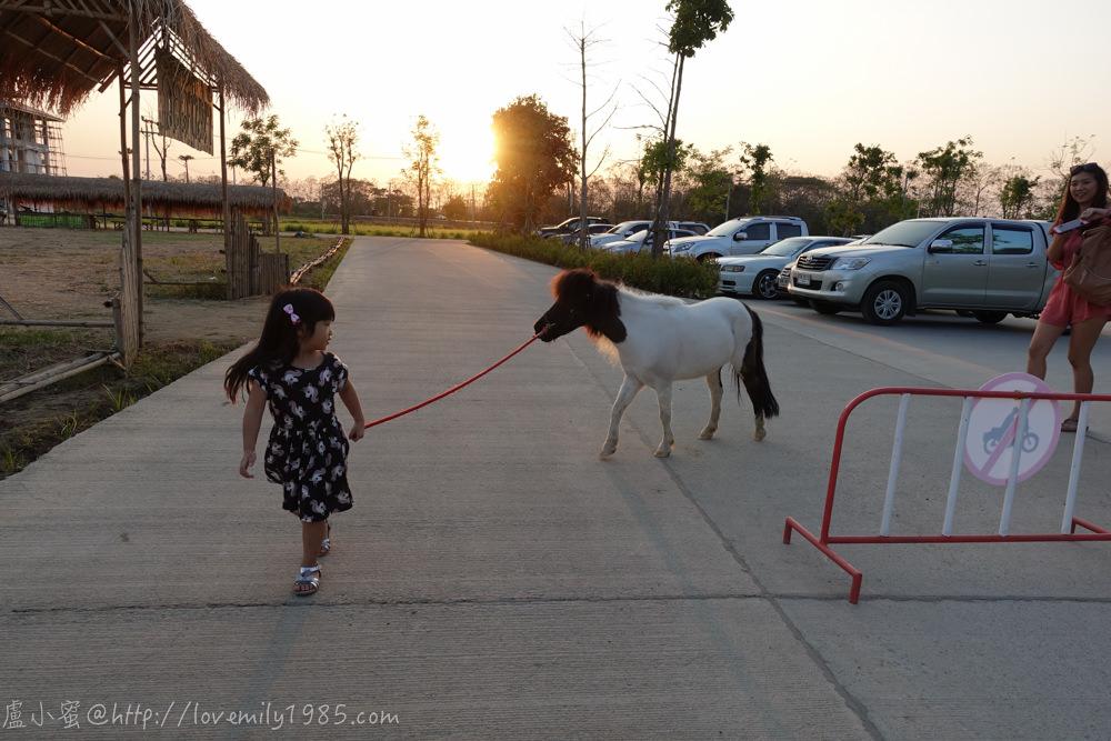 【泰國。清邁】超親近動物的親子自由行 Day2-3  近市區的Dutch Farm親子荷蘭農場(意外賺到遛小馬)→逛更巨大的週日夜市(THA PHAE GATE)
