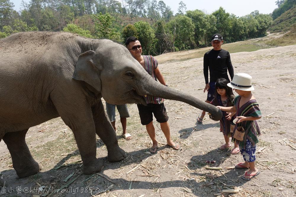 【泰國。清邁】超親近動物的親子自由行 Day3-1  推薦必玩景點!友善大象體驗營。不騎大象,陪大象一整天(上午:親近大象,有影片)