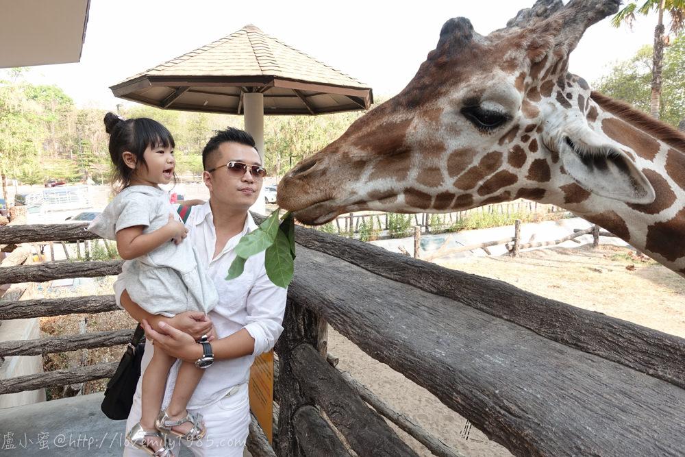 【泰國。清邁】超親近動物的親子自由行 Day5-2 清邁夜間動物園Chiang Mai Night Safari(上),白天先步行區看動物。動物介紹。動物表演