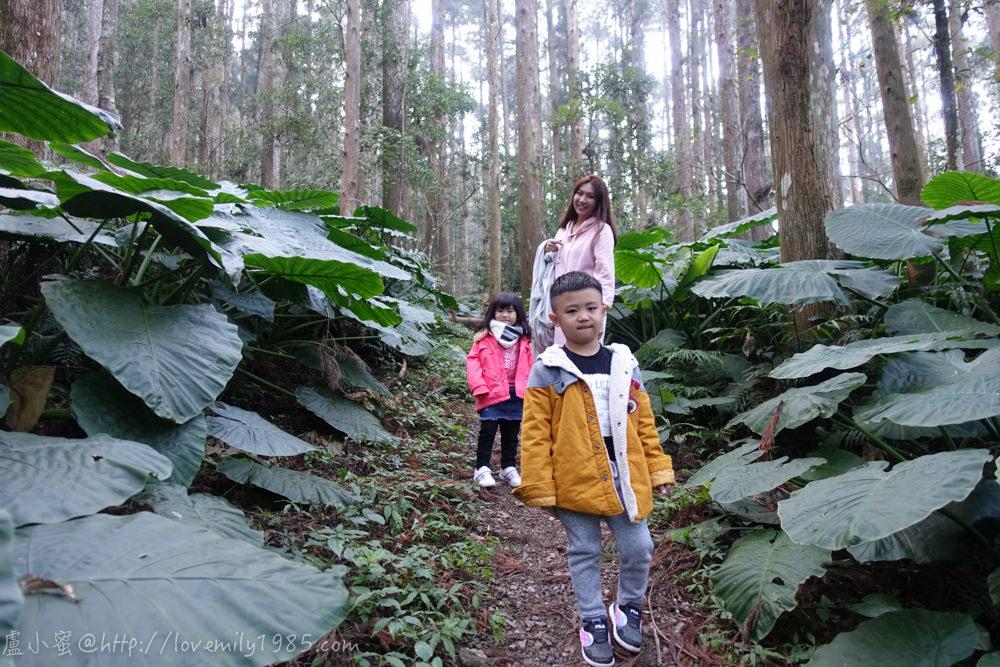 【露營】聖誕快樂回味第七露。新竹尖石鄉起初露營區 Day2-2 內心戲很多的森林步道。起初露營區介紹