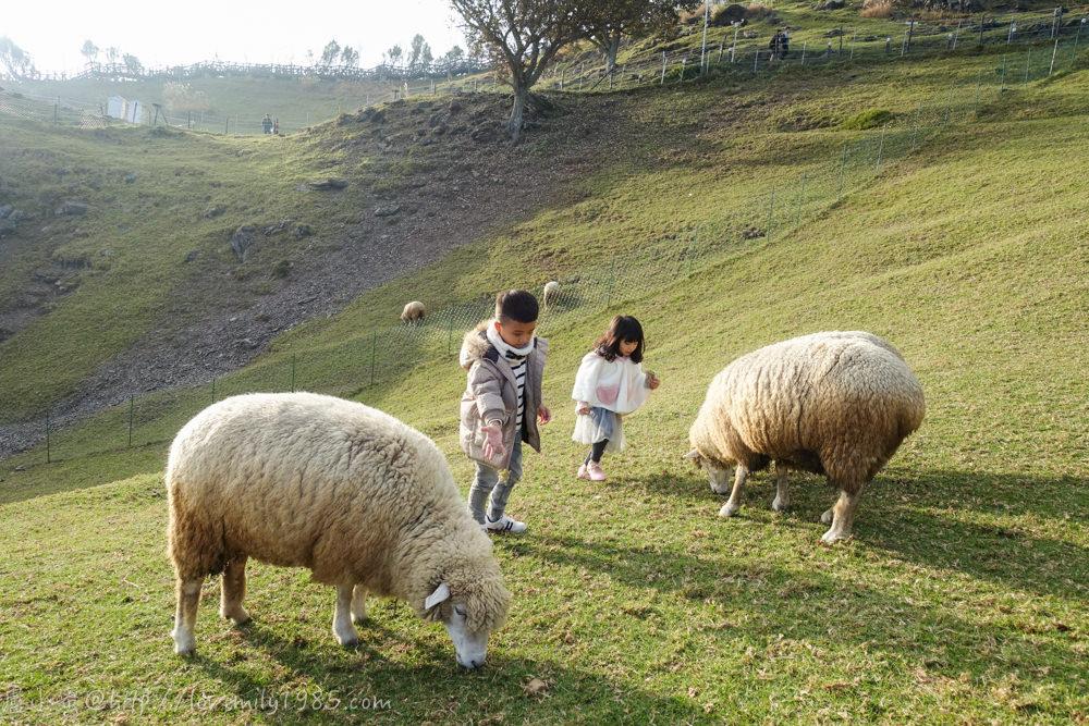 【南投清境。旅遊景點】南投必遊景點~清境農場/青青草原/觀山牧區,寬廣草原寬闊心情,羊群未免也太療癒
