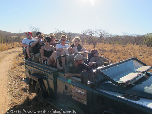 旅遊新地圖。South Africa。 Day6-3 馬布拉野生動物保護區【敞篷狩獵趣。夕陽】