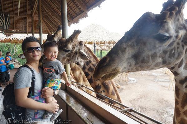 馬新泰。遊走三國看房兼渡假 Day7-2 野生動物園Safari World【餵長頸鹿.遊園車遊Safari Park】